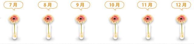 コース:お花コース・プラン:両親に直接プラン(奥さん宛に利用)・頻度:毎月
